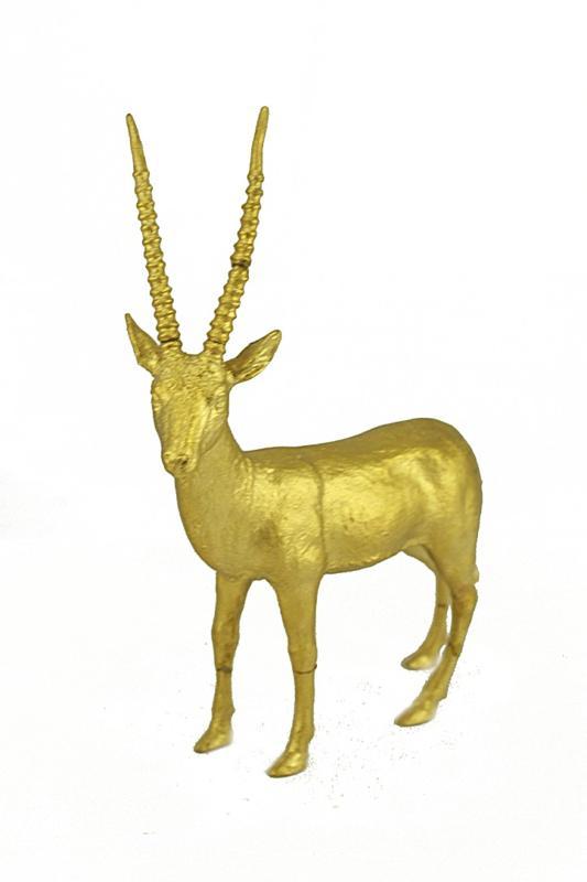 Gazelle Pictures Color Gazelle Color Gold